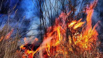 Prepovedano kurjenje in uporabljanje odprtega ognja v naravi