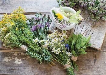 Obvestilo za ponudnike zeliščarskih pridelkov, izdelkov in storitev