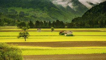 Prijava škode v kmetijstvu zaradi suše
