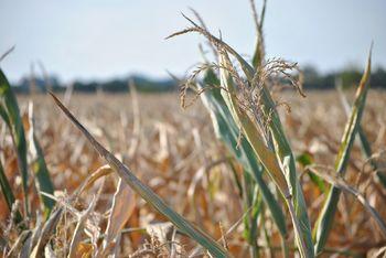 Podaljšan rok za prijavo škode zaradi suše do 8. 9. 2017