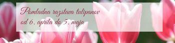 Pomladna razstava tulipanov