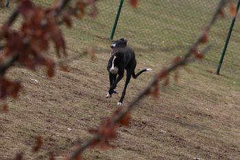 Akcija ozaveščanja lastnikov psov