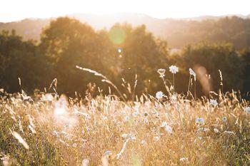Zajčji dnevi: Košnja trave pri Šnep