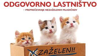Dodatna sredstva za sofinanciranje sterilizacije in kastracije lastniških mačk