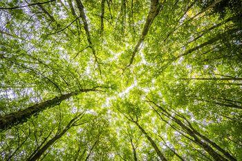 Javni poziv MKGP – zbiranje predlogov za vpis v katalog investicijskih priložnosti slovenskega gozdno-lesnega sektorja