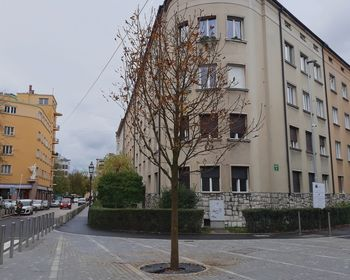 Novo drevo na Erjavčevi cesti