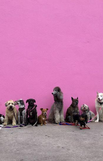 LP: Ustvarjanje s psi