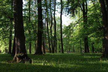 Obvestilo o nujnih delih v Grajskem parku