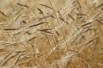 Razpis - Kmetijstvo 2020