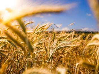 Tudi letos 100.000 evrov občinskih spodbud za ohranjanje in razvoj kmetijstva ter podeželja