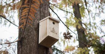 Na kaj moramo biti pozorni pri hranjenju ptic?