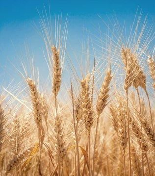 Javni razpis za kmetijstvo 2020