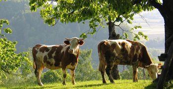 Na pragu našega mesta deluje 822 kmetij