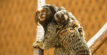 Družinsko življenje v Živalskem vrtu Ljubljana