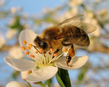 Varujmo čebele