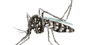 Kaj lahko naredimo, da nas tigrasti komar ne bo pičil?