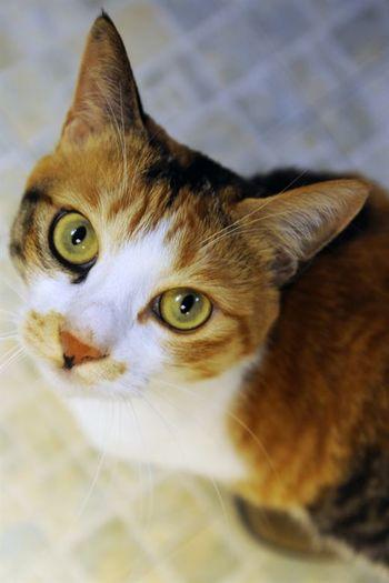 Sofinanciranje sterilizacije in kastracije lastniških mačk v letu 2020