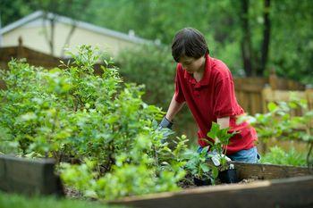 Vabljeni na prikaz letnih opravil v vrtnih sadovnjakih