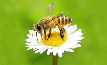 Ukinitev prepovedi premika čebeljnjakov oz. čebeljih družin (Boharina in Loška Gora)