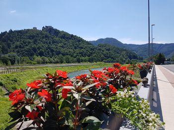 Cvetje tudi na mostu na Ulici XIV. divizije