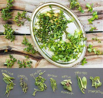 Divje rastline, zelišča ali okusna jed?