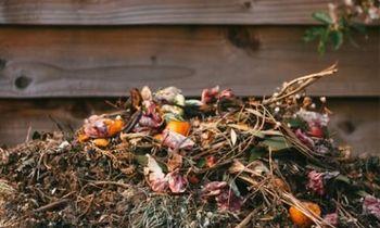 Razbijmo pogoste dileme o bioloških odpadkih