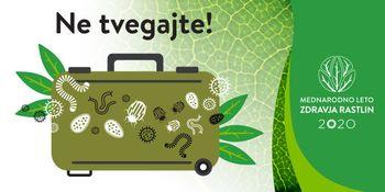 Ne prinašajte domov rastlin semen, plodov, zelenjave ali cvetja iz potovanja, ker se v njih lahko skrivajo bolezni in škodljivci rastlin