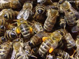 Vabilo na posvet tržno usmerjenih čebelarjev