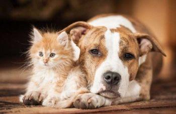 Subvencioniranje kastracije in sterilizacije mačkov in psov