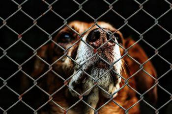 Za zapuščene živali na območju občine Jesenice bo skrbelo Zavetišče Horjul