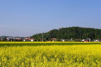 Obvestilo gospodinjstvom: Lokacije zbiranja in odvoza zelenega odreza