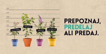Pripravljamo že 3. festival uporabe invazivnih tujerodnih rastlin