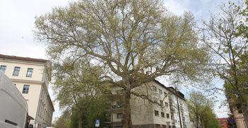 Glasujte za drevo leta 2020