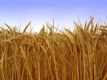 Podpora kmetom ter malim in srednjim podjetjem