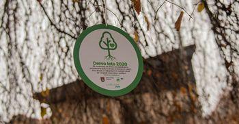 Izbrali smo drevo leta 2020