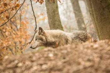 Video: Živalski vrt Ljubljana je spet odprt