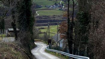 S sosednjima občinama bomo prenavljali lokalno cesto do Knežije