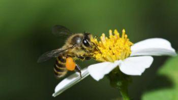 Tehnična pomoč čebelarjem - sofinanciranje čebelarske opreme