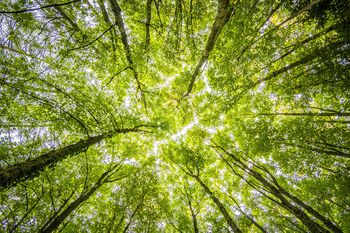Gozdnogospodarski načrt – objava za zbiranje pobud