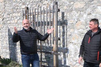 Na Žovneškem gradu rez potomke najstarejše trte na svetu