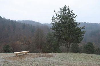 Sečnja na Hrušici pri vstopni točki URBforDAN na Golovec