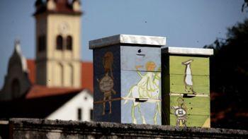 Tudi v Novem mestu praznujemo svetovni dan čebel