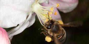 Čebelarji, vabljeni k sodelovanju v anketi