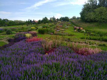 Razkošje cvetov in vonjav v vrtnariji Adamič