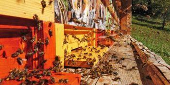 Javni razpis za ukrep sofinanciranje čebelarske opreme in racionalizacijo sezon