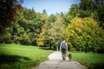 Video: S psom v park