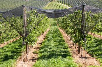 Možnost sofinanciranja kmetijskih naložb
