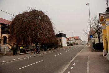 Skupaj izberimo drevo leta 2021