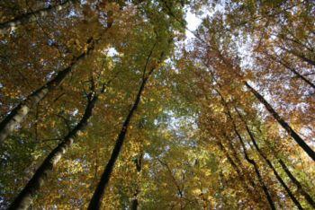 Vabilo na sprehod po obnovljeni gozdni učni poti v Radovljici