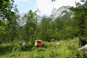 Potrjeno: primerna že četrta čebelarska pobuda za vpis v Register nesnovne kulturne dediščine
